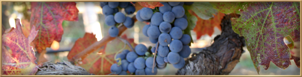 dynamic wine tours faq