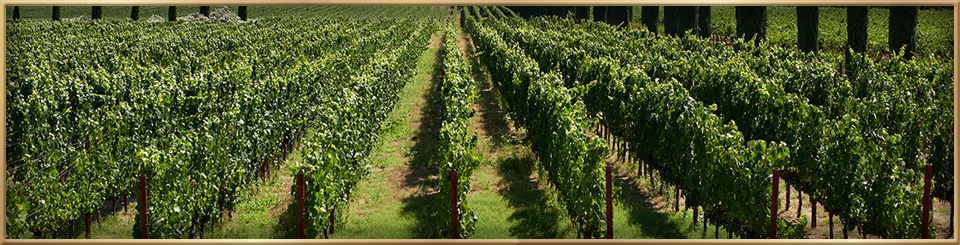 napa valley wine tours reservations