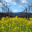 Join Dynamic Wine Tours for Top Napa Valley Wineries with Great Views!